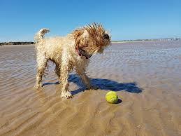 vacanza col cane al mare
